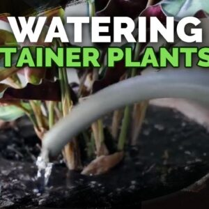 Watering Container Plants: Everything You Need to Know | 💦🌱