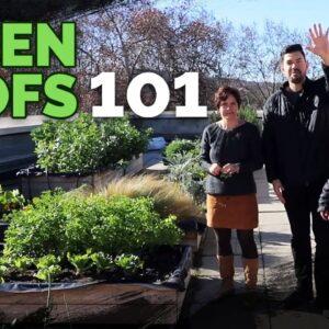 Green Roof Fundamentals: Building an Epic Rooftop Garden �🌱