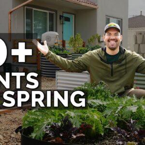 50+ Plants I'm Growing In My Spring Garden 🌱 🌷 🥕