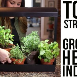 Top 6 Struggles of Growing Herbs Indoors (w/ solutions)!!!🌿🌿🌿 // Garden Answer