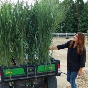 Planting the Most Glorious Ornamental Grasses!!! �🌾💚 // Garden Answer