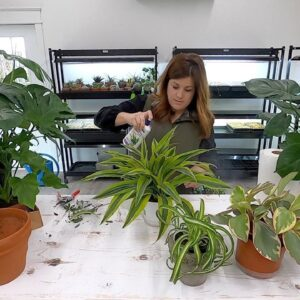 Picking Out Houseplants for our Mantel! 🌿🥰// Garden Answer