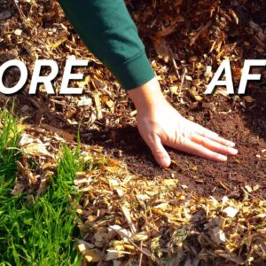 How To Get Rid Of Gnarly Weeds (Without Spraying) 🚫 🌾