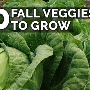 10 Veggies to Plant NOW for a Fall Harvest