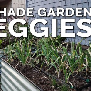 12 Perfect Vegetables To Grow in a Shady Garden Space