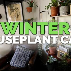 13 Winter Houseplant Care Tips 🌱❄️