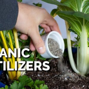 14 Organic Fertilizers and How to Use Them