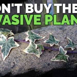 16 Invasive Species Sold at Garden Centers You Should Never Buy
