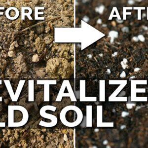 2 Easy Methods to Revitalize OLD Potting Soil