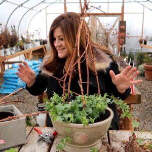 2 Houseplant Arrangements 🌿🥰 // Garden Answer