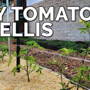 3 DIY Tomato Trellis Ideas, Perfect for ANY Budget 🍅