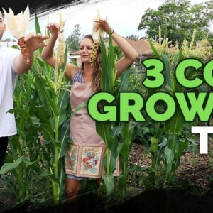 3 Epic Tips For Growing Corn!