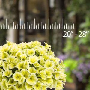 3 Novel New Supertunia Petunias for Spring