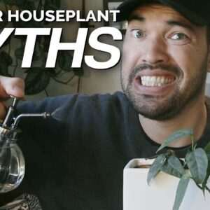 4 Houseplant Myths We Should Stop Believing