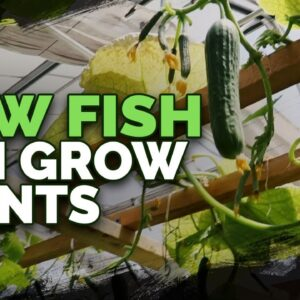 492lb of Cucumbers in 4 Weeks?! Aquaponics Greenhouse Tour