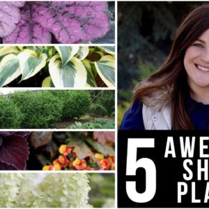 5 Awesome Plants for Shady Gardens