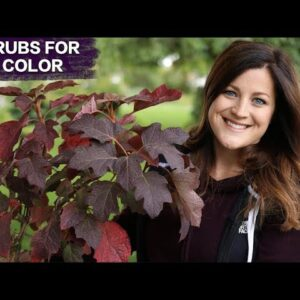 5 Awesome Shrubs for Fall Color // Garden Answer