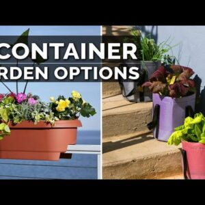 5 Container Gardening Options for Apartment Gardeners