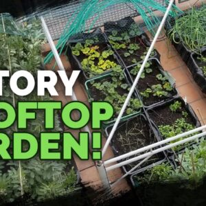 5 Story Rooftop Gardening in Spain (Full Tour)