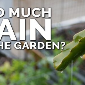 5 Tips to Save Your Vegetable Garden After Too Much Rain