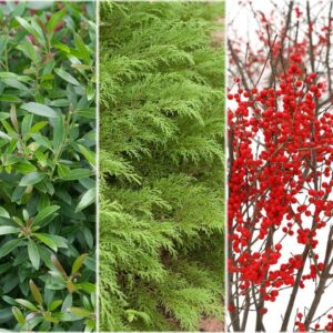 5 Types of Plants for Winter Interest