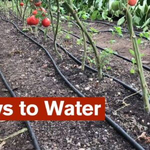 5 Ways to Water