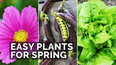 6 Easy Plants to Grow in Your Spring Garden 🌷 🥔