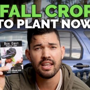 6 Fall Crops To Plant Now and Grow Through Winter