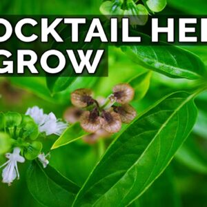 6 Perfect Plants for a Cocktail Herb Garden