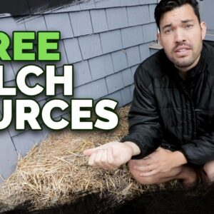 7 Cheap (Or Free) Mulch Sources and How To Use Them In Your Garden