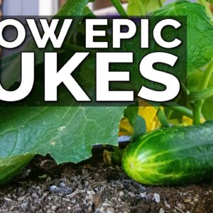 7 Tips to Grow Cucumbers in Containers