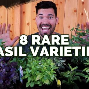 8 Basil Varieties You Might Not Know About...