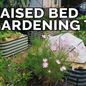 8 Of My BEST Raised Bed Gardening Tips