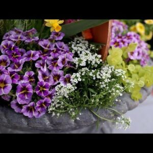 A Container Garden to Celebrate Easter