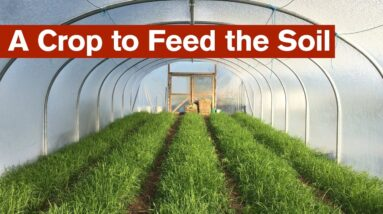 A Crop to Feed the Soil