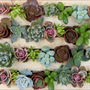 A Miniature Succulent Pallet