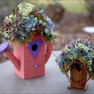 A  Quick Glance--Succulent Covered Birdhouse