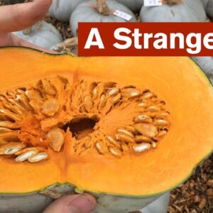 A Strange Year for Growing Squash
