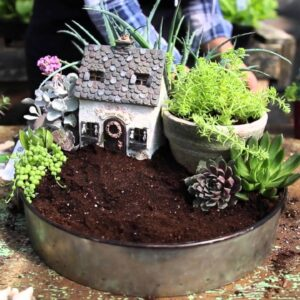 A Sweet Container Garden To Decorate As You Like