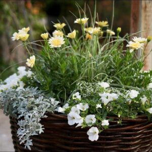 Add a touch of Moonlight to your Garden!