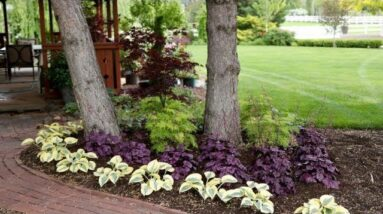 Adding Colorful Plants Under Trees