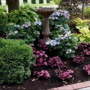 Adding Plants Around Tuff Stuff Ah-Ha Hydrangea