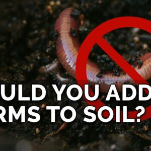 Adding Worms To Bad Soil Won't Fix It...Here's Why