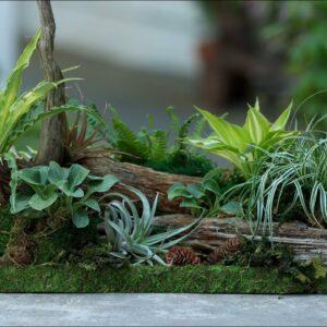 Miniature Woodland Tabletop Garden! 🥰🌿💚 // Garden Answer
