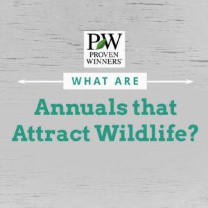 Annual Varieties that Attract Wildlife