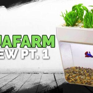 Aquafarm Review Pt. 1