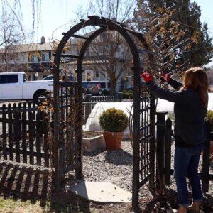 Pruning Climbing Roses on a Trellis, Arbor & Obelisk! 🌹✂️🌿 // Garden Answer