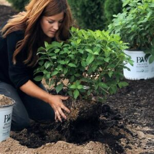 Planting a New Variety of Hydrangea! 💚🙌🌿// Garden Answer