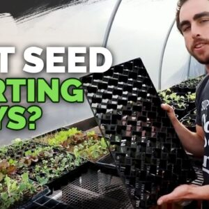 Best Seedling Trays: Soil Blocks, Winstrip, and Plug Trays Compared
