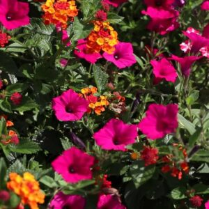 Bring On the Heat with Plants That Love Hot Weather